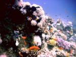 GordonReef0023_2.jpg