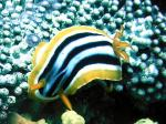 Nudibranch0048_2.jpg