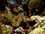ThomasReef0064_2.jpg